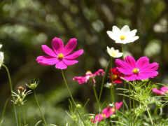цветы, поле, поляна