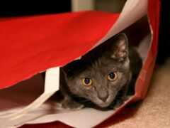 кот, package, окно