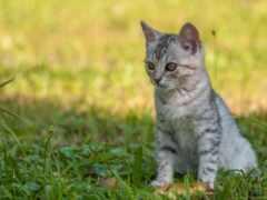 кот, трава, котенок