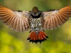 дятел, fly, птица