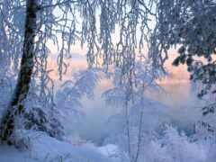 winter, лес, иней