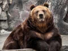 медведь, animal, zoo