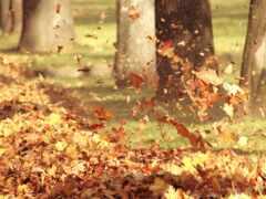 лист, ветер, осень