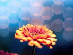 цветы, фон, full
