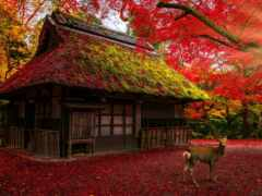 art, лань, japanese