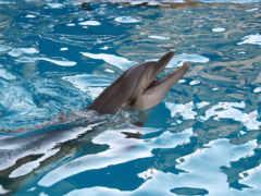 delfines, дельфины, пол
