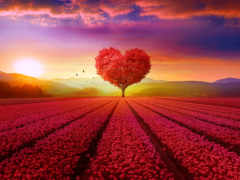 love, сердце, subscribe