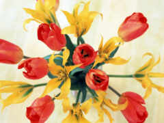 red, цветы, yellow