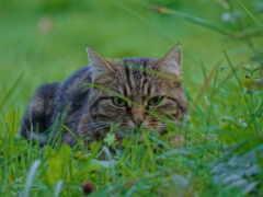 кот, трава, уши