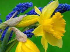 цветы, весенние, цветник