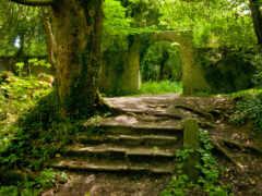 природа, лес, landscape