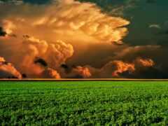 поле, красивый, совершенн