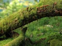 дерево, лес, branch