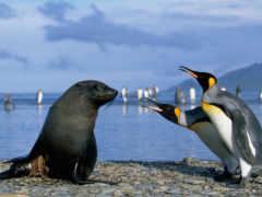 пингвины, пингвинов, котики