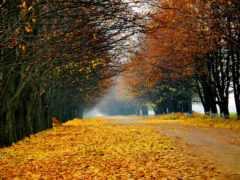 осень, осени, осінь