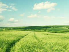 ферма, небо, облако