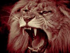 lion, african, алкоголь