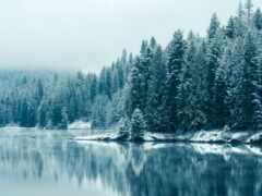 лес, winter, дерево