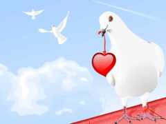 сердце, птица, голубь