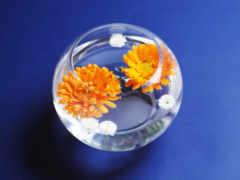герберы, цветы, вазу