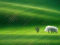 пастбище, зеленый