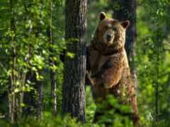 медведь, kriptovaluta, соседка