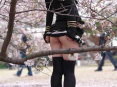 сакуры, цветение, Сакура