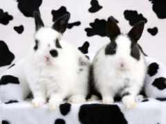 кролики, далматинцы