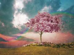 дерево, розовое, фактура