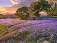 природа, цветы, landscape