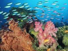 fish, marine, миро