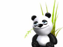 panda, animals