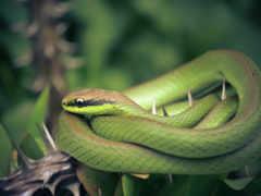 snake, zhivotnye, ок
