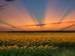 flores, закат, небо