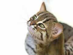 кот, spot, ржавый