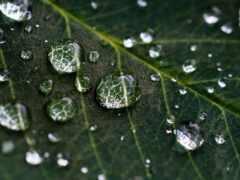 life, цитата, дождь