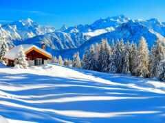 winter, лес, день