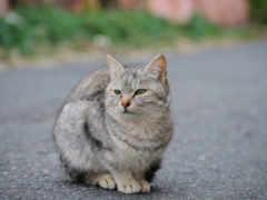 кот, кошки, кошек