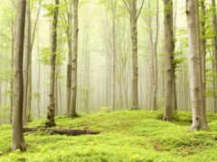 dry, лес, гладь