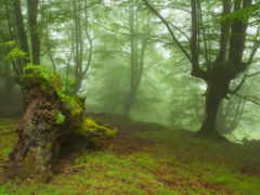лес, природа Фон № 22486 разрешение 1920x1280