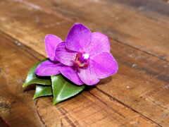 орхидея, цветы, картинка