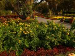 сады, картинка, природа
