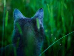 кот, hunter, трава