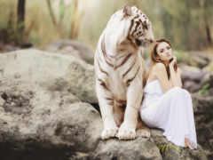 iphone, тигр, фотосессии