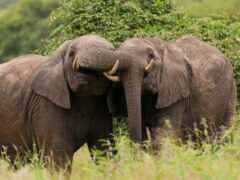 слон, funart, animal