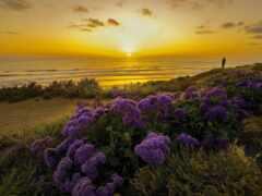 закат, funart, ocean