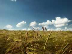 поле, день, margin