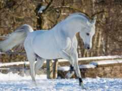 pantalla, caballo, sobre