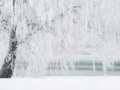 amazon, поток, снег