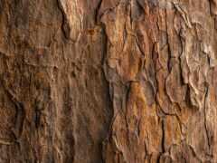 кора, дерево